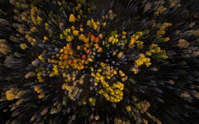 lappish_autumn_forest