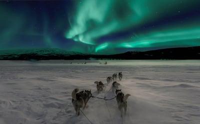 husky_and_northern_lights_tours