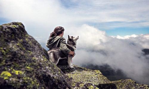 husky_in_swedish_mountain