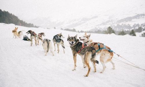 husky_pack_in_finland