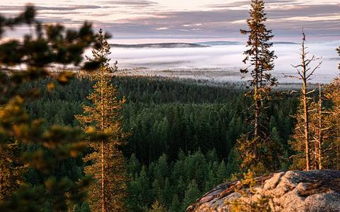 capture_lapland_pineforest_landscapes
