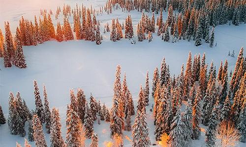 lappish_winter_forest