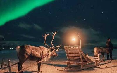 reindeer_waiting_under_aurora_sky